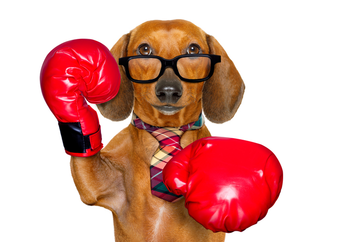 Avoid The Dog Fight By Not Waiting Until January To Recruit