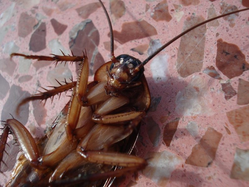 """Chinese Company Have Been Forced Their Under-Performing Staff To Drink """"Urine"""" and Eat Cockroaches For Not Meeting Sales Targets"""